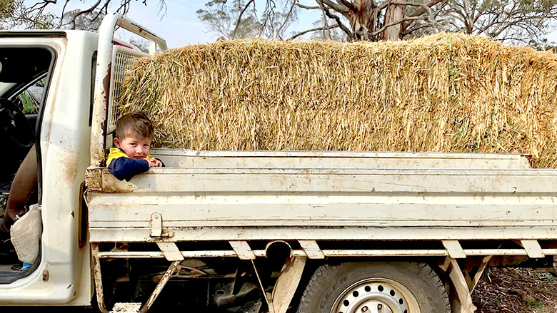 Child in ute with hay
